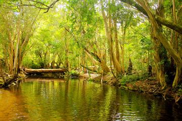 Excursão de meio dia particular: excursão exclusiva na floresta...