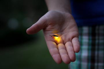 Fireflies Santuary & Penarik Fishing Village from Kuala Terengganu