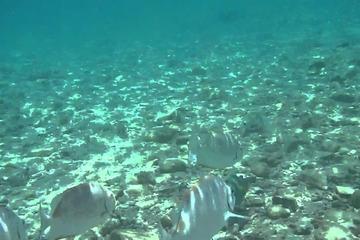 Kota Kinabalu - Tunku Abdul Rahman Marine Park  Day Trip