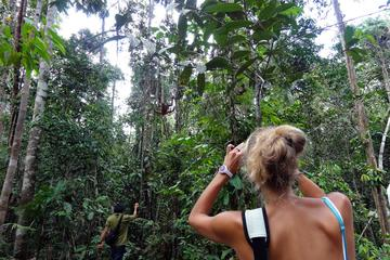 Semenggoh & Matang Wildlife