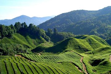 Small-Group Cameron Highlands Countryside Tour