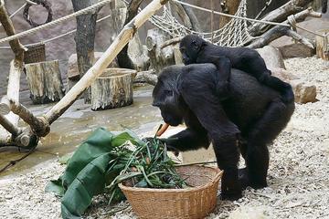 Biglietto d'ingresso allo zoo di Praga incluso il trasferimento di