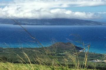 Tasting the Best of Maui Farm Tour