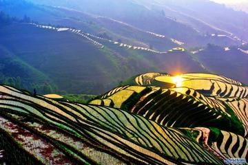 Bustour: Longji-Reisterrassen und Dorf einer lokalen Gemeinschaft