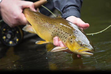 Brown Trout Fly Fishing Day Tour in Lough Corrib County Galway