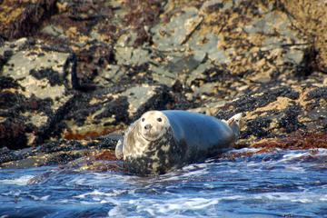 Full-day Private Connemara and Inishturk Island Wildlife-Watching cruise