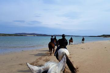 Full-day Wild Atlantic Way Horseback Riding Excursion from Galway