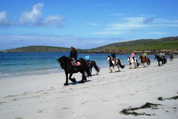 Guided Beach Horse Riding Excursion...