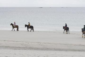 Half-Day Tour: Connemara Wild Atlantic Way Guided Beach Horseback Ride from Galway