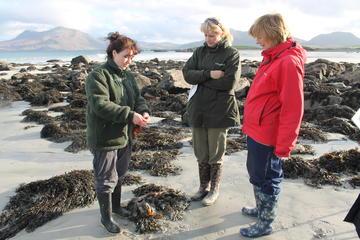 Private Tour: Bog Beach and Connemara...