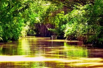 Escapadas privadas de un día al Delta del Tigre desde Buenos Aires