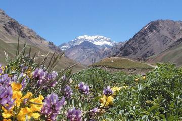 Gita di 4 giorni a Mendoza e nelle