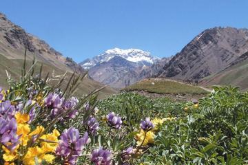 Viaje de 4 días a Mendoza y los Andes