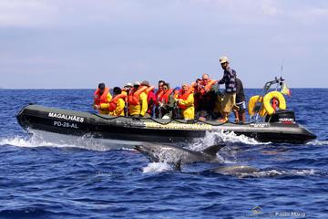 Excursión de medio día de avistamiento de ballenas y delfines