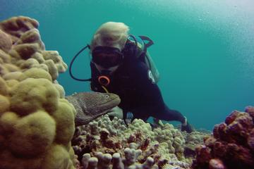 Book Certified Diving Tour: Waikiki South Shore Shallow Boat Dive on Viator