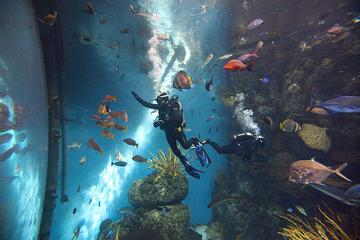 Tour privato dello zoo, dell'acquario e degli Hutong di Pechino