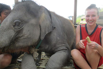 2-Day at Elephant Retirement Park with Homestay and Meals in Chiang...