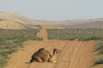 Private Group Full Day Tour: 4x4 Wahibah Desert and Wadi Bani Khalid...
