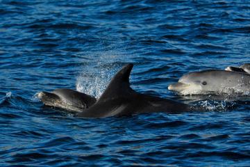 Dolfijnen spotten vanuit Lissabon