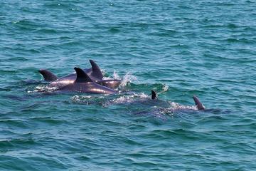 Tour di avvistamento dei delfini da Lisbona