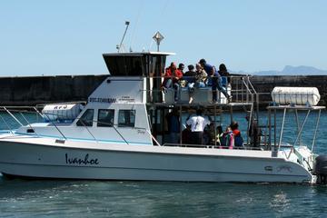 Big 5 Sea Safari in Walker Bay from...