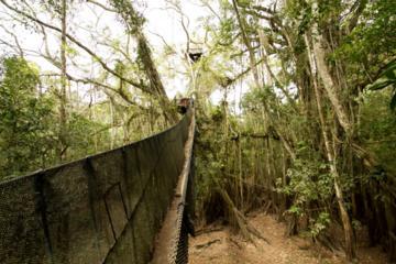 6 días en el refugio ecológico amazónico de Puerto Maldonado desde...