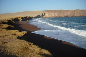 Ballestas Islands and Paracas National Reserve