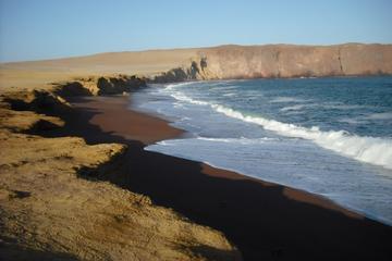 Gita di un giorno alle Isole Ballestas e alla riserva di Paracas da