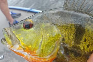 Viaje de mediodía de pesca de lubina...