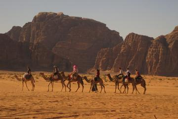 Sharm El Sheikh Bedouin Night with Star Gazing & BBQ with Live Belly Dance Show