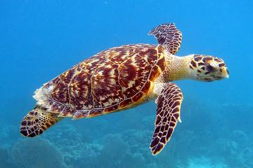 Schildkröten füttern und Schwimmen in...