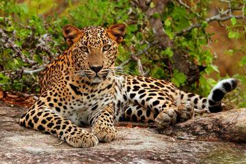 Yala National Park Adventure from...