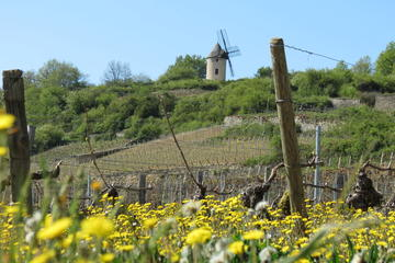Private day tour to Burgundy wine region from Paris