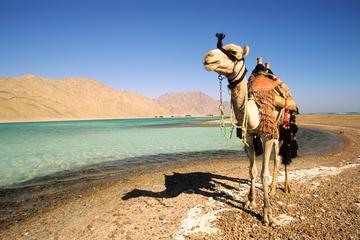 2-Hour Camel Safari to Wadi Bida or...