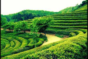 韓国発見:ソウルや光州などを巡る西韓国4日間