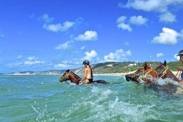 Horse Swimming Ride from Rainbow Beach
