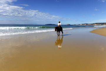 Rainbow Beach Horse Ride