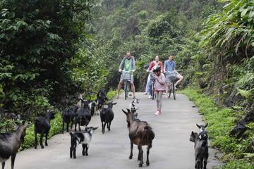 Excursion de 3jours dans la baie d'Halong-Lan Ha et sur l'île de Cat...