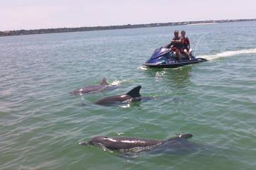 2-hour Dolphin and Caladesi Island Jet Ski Tour