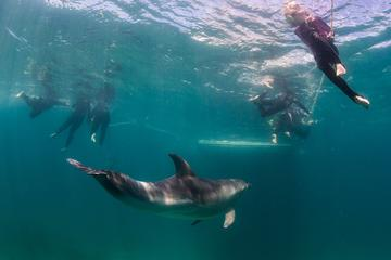 Half-Day Mornington Peninsula Dolphin and Seal Swim from Sorrento