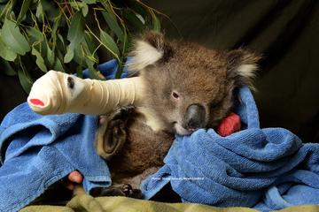 Gita giornaliera alla riserva di Healesville Sanctuary e alla Yarra