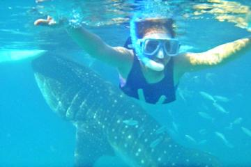 Full Day Whale Shark Experience with Tumalog Falls from Cebu