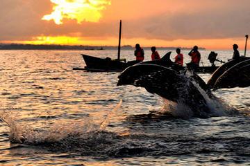 Delfinbeobachtung, Wasserfälle und...