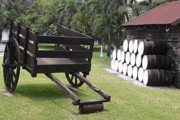 Appleton Rum, YS Falls and Black River Safari Combo Tour from Montego...