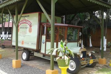 Tour del rum di Appleton Rum e delle YS Falls da Montego Bay e dal