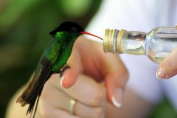 Tour della riserva degli uccelli delle Rocklands e delle attrazioni