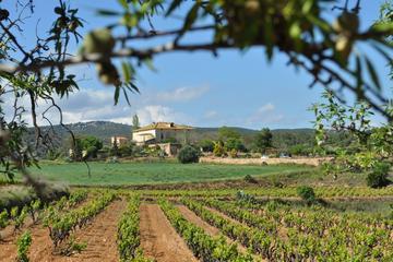 Recorrido gastronómico y de vino por la región del Penedés con...