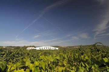Recorrido vinícola y por las bodegas del Penedès desde Barcelona