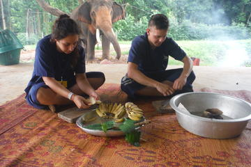 Elephant's Day Care at Baanchang Elephant Park in Chiang Mai