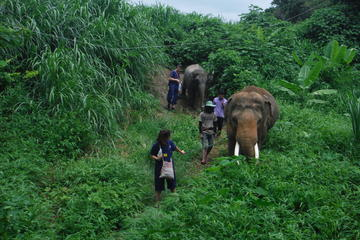 Elephant's Friend Day: Full-Day Elephant Experience at Baanchang...